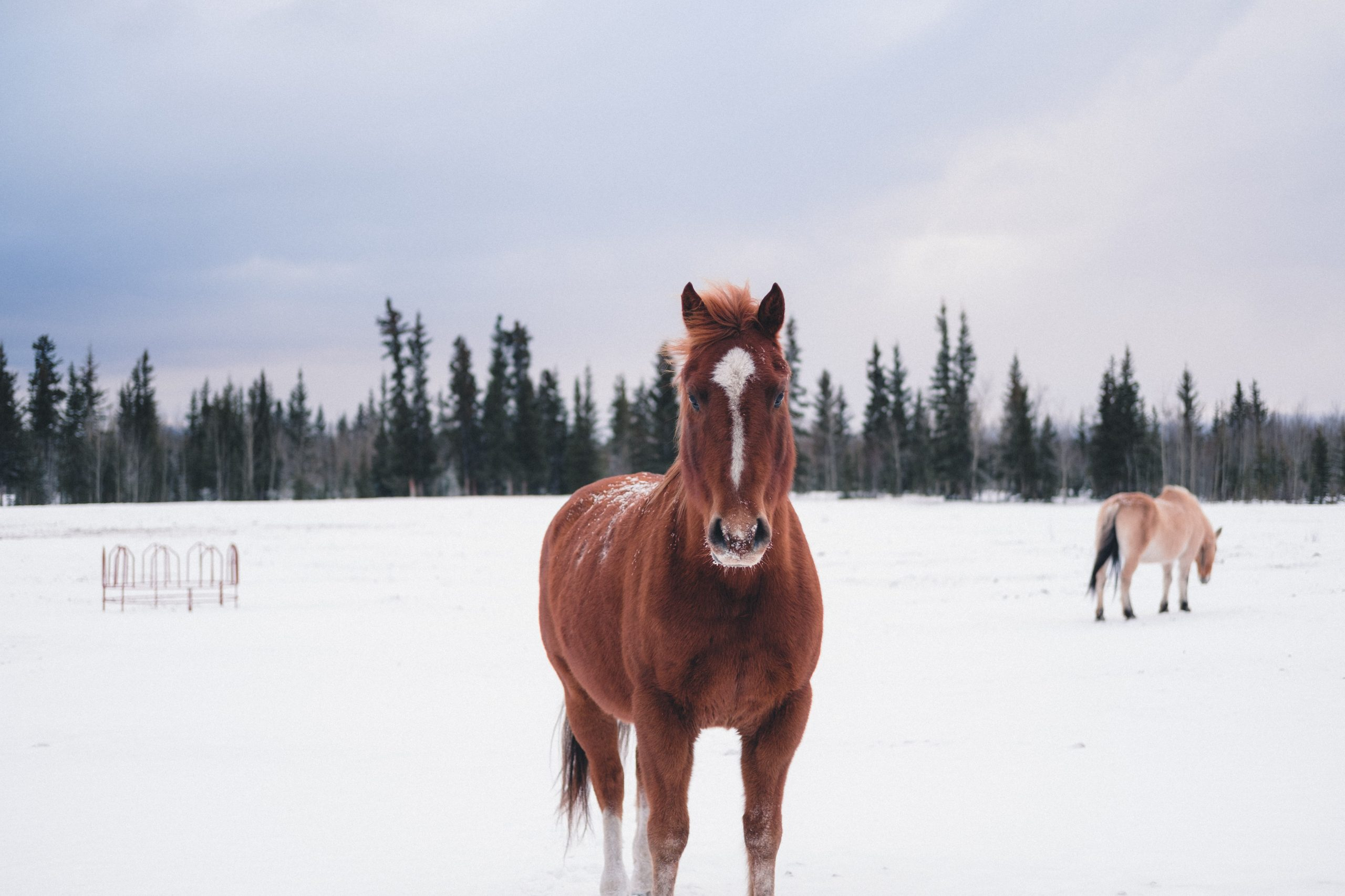 winter survival guide for horses