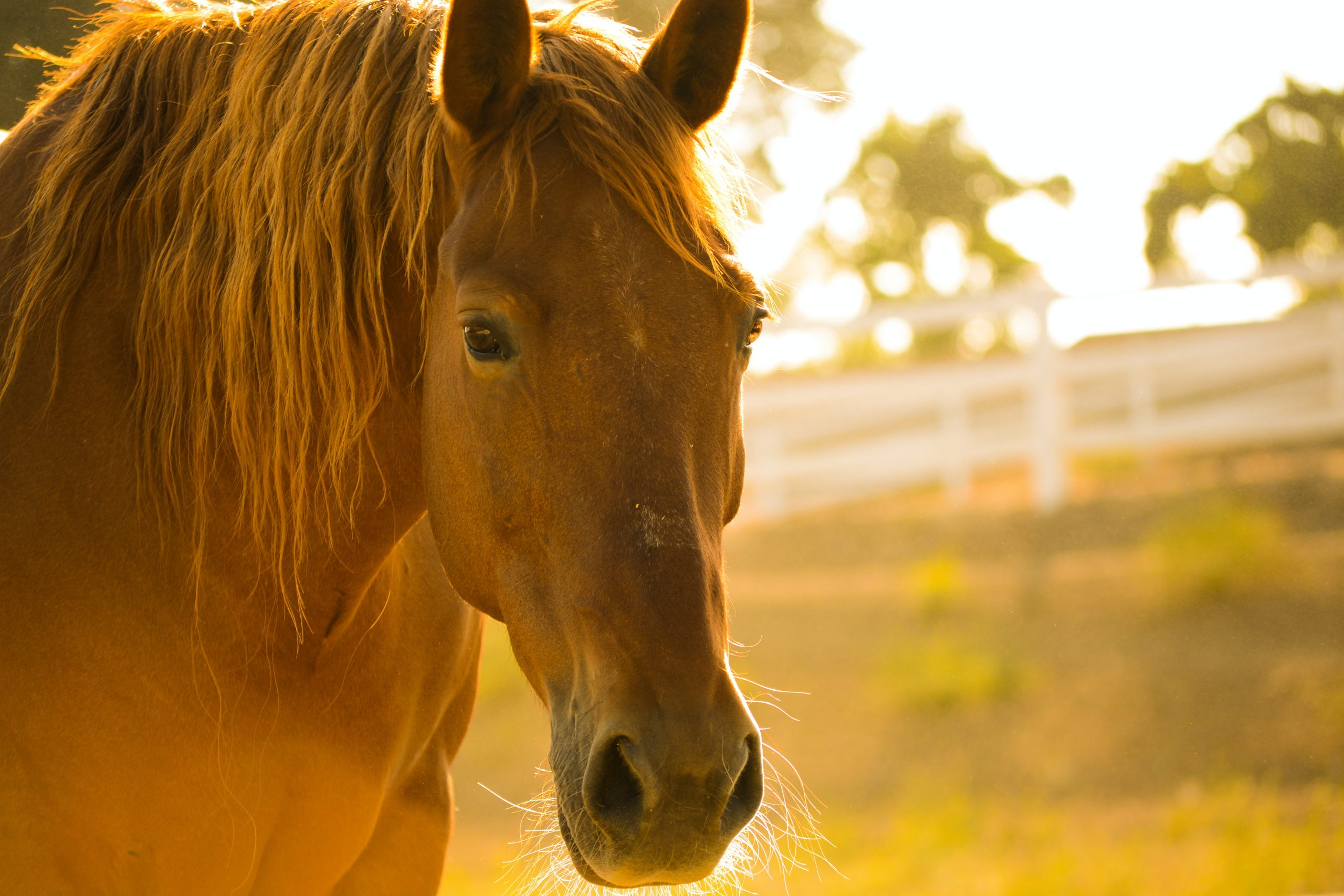 horsey hot weather survival guide