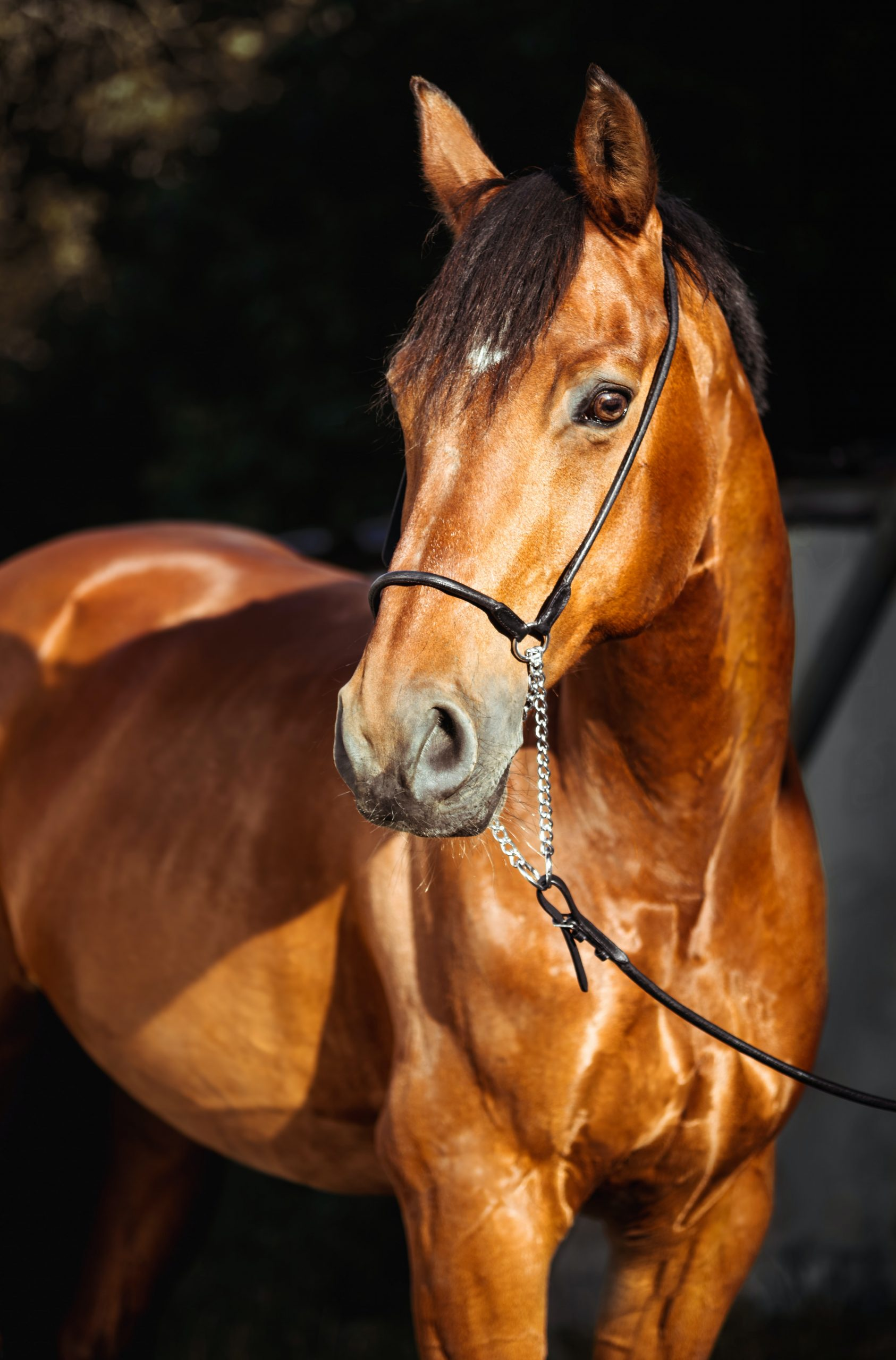 horse first aid course nkc equestrian